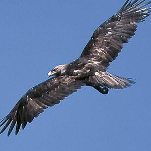 fbbva-biocon-2004-aves-espana