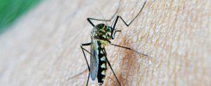mosquito-1600×650